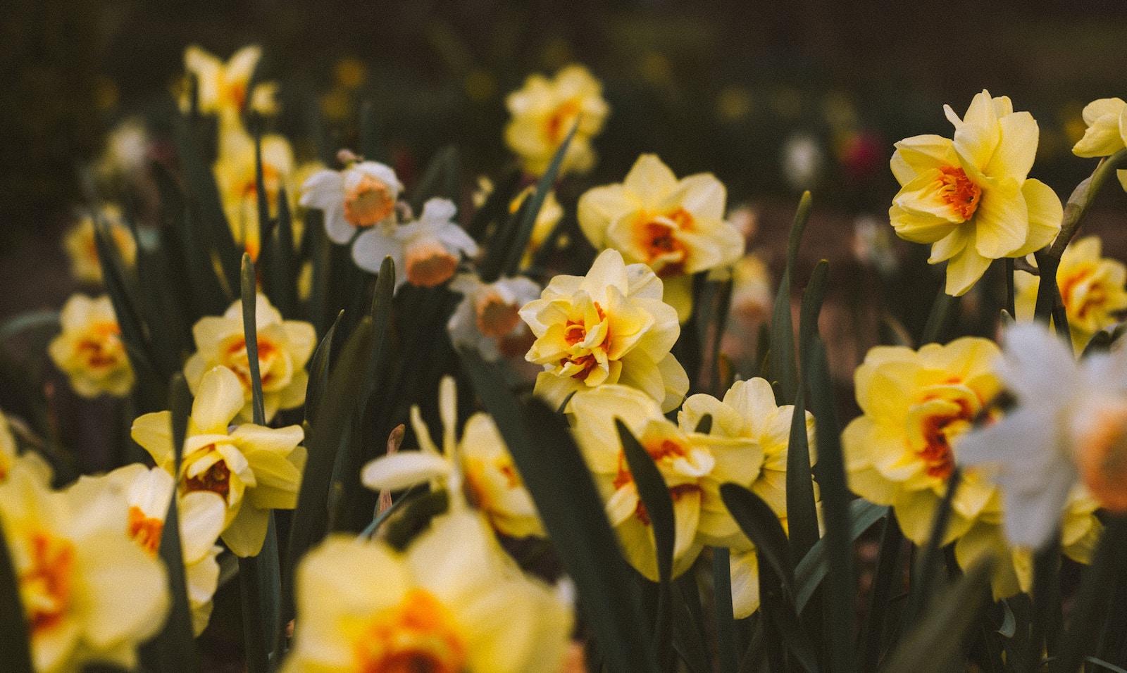 Voorjaarsvakantie en kijklessen